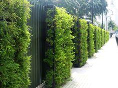 Green Wall Systems   tanks green walls drainage systems green wall 1 greenwall 2
