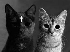 Hasil gambar untuk gatos tumblr