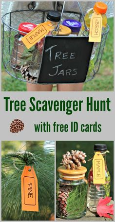 Fun Tree ID scavenger hunt & outdoor learning activity kids - explore trees, leaves and tree seeds! Comes with free printable Tree ID cards too - great idea for a nature study, life sciences activity or ecology unit. Forest School Activities, Outdoor Activities For Kids, Nature Activities, Outdoor Learning, Kids Learning Activities, Autumn Activities, Stem Activities, Fun Learning, Sabbath Activities