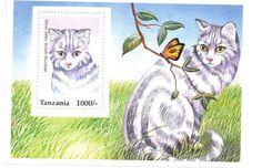 Tanzania - Cats , 1996 -Sc 1438 S/S MNH