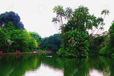 22008762-Botanic-Garden-Singapore-Swan-Lake-National-Park-Stock-Photo.jpg (1300×866)