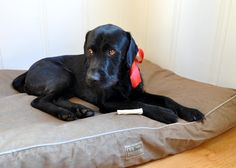 Don't you just want to cuddle with Lincoln on his #LLBean dog bed?!