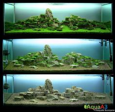 2nd place AGA 2010. Tank size : 160 x 52 x 60. Growing Plants !
