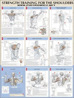 Strength Training for the Shoulders: lateral raises, alternate front raises, alternate lateral raises with lower pulley, bent-over lateral raises, barbell front raises, seated anterior dumbbell raises, back press, front press, seated dumbbell press ♦ #health #fitness #exercises #routines #shoulders #diagrams #body #muscles #gym #bodybuilding