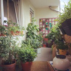 Balcony, chapter 2
