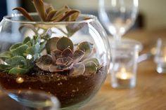 Lavender & Leaf Designs: Succulents Galore!