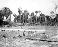 Florida Memory - Mill at Crystal River, Florida