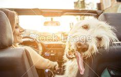 фотобанк фотодженика, фото собак высокого разрешения
