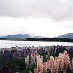 Hiromitsu: Lago Tekapo por deco_o no Flickr.substituída pelos arranha ceus de concreto beira mar,