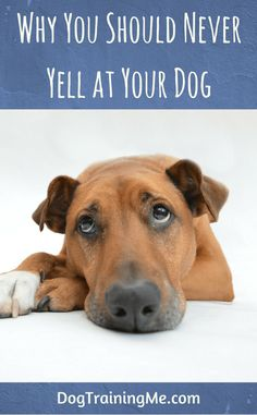 We take a look at some very good reasons why you shouldn't yell at your dog. We also give you some suggestions on what you can do instead of yelling to get through to your dog. Check out our article now.