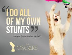 The Academy Awards are on in just a few hours and our furry friends are in the spirit... especially our favorite featherless friend Oscar the naked bird. Check back soon for some Oscar-themed goodness. #oscars #oscars2017 #academyawardsselfie . . . . . . . . #dog #dogs #dogsofinsta #funny #oscars #oscar #love #cute #cutie #adopt #adoptdontshop #humanesociety #hsbroward #florida #miami #broward #fortlauderdale #charity #nonprofit #movies #awardsnight #rescue #animal #pet