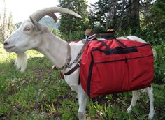 Northwest Pack Goat & Supplies -  They carry all your packing needs
