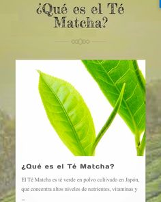 Te invitamos a informarte de todo lo que debes saber del Té Matcha y sus increíbles propiedades desde nuestro sitio web oficial www.matchachile.cl  ----------- #matcha #matchachile #matchalovers #info #datos #propiedades #preparación #téverde #chile