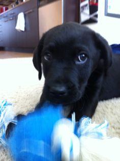 New toy. #puppy