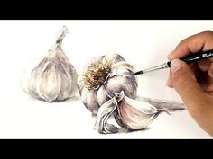 Today I'll be painting Garlic. It looks simple, but it is tricky to paint since the color of the garlic is almost white and there is no clear point to depict. Watercolor Paintings Nature, Watercolor Video, Watercolor Fruit, Watercolor Painting Techniques, Nature Drawing, Pen And Watercolor, Watercolour Tutorials, Watercolor Portraits, Painting Tutorials