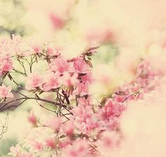 *Pink flowers*