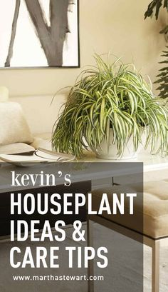 Kevin's Houseplant Ideas & Care Tips | Martha Stewart Living - i couldn't wait to bring plants into my apartment. Any good decorator will tell you that a house needs living things -- other than its owner -- to make it feel like a home. Plants are the perfect solution for me, because the level of care they require suits my busy life. And they look so good, softening the right angles of the rooms and adding a sculptural element to the decor. But mainly I love them because they're alive.