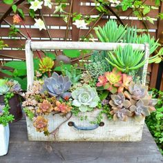 Small Succulent Container Garden Ideas 15 (Small Succulent Container Garden Ideas design ideas and photos - Garten Sukkulente Succulent Planter Diy, Succulent Gardening, Planting Succulents, Container Gardening, Planter Ideas, Succulent Ideas, Succulent Garden Diy Indoor, Log Planter, Fairy Gardening