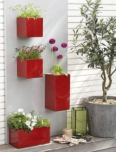 feng shui grass seed in red containers - Google Search