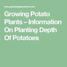 Growing Potato Plants – Information On Planting Depth Of Potatoes