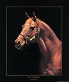 Secretariat: Last Portrait by Tony Leonard--I have this lithograph.