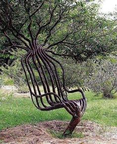 Artist Peter Cook sculpted this natural chair by controlling how the tree grew its branches.