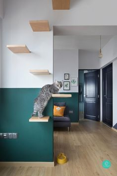 5 Cat-Friendly Playgrounds At Home | Qanvast