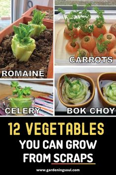 12 Vegetables You Can Grow From Scraps 12 Vegetables You Can Grow From Scraps ,Everything Plants and Flowers Here are 12 vegetables you can grow from scraps! garden ideas vegetable vegetables gardening to start in january Growing Vegetables Indoors, Regrow Vegetables, Planting Vegetables, Growing Plants, Fruits And Veggies, Home Vegetable Garden, Replant, Raised Garden Beds, Lawn And Garden