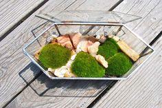Grow moss on rocks!