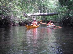 Explore the mystical NJ Pine Barrens on the Wading River - Chesapeake Kayak Adventures (Ellicott City, MD) - Meetup