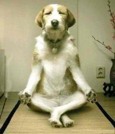Doggie Yoga