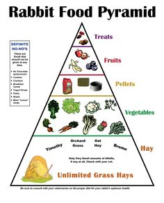 """Rabbit Food Pyramid"" - I don't agree with the vegetable part. While rabbits should have unlimited grass hay, they should have a main diet of quality pellets; vegetables and fruits are supplements (albeit important ones). Treats don't really belong on this pyramid; fruits and veggies are treats enough for rabbits. Store-bought treats, especially, are not healthy for rabbits."