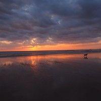 Dog Enjoying a Brilliant Sunset on the beaches of Playa Pelada