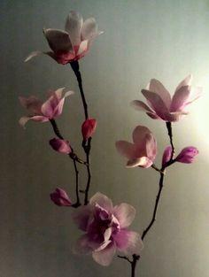 Do it yourself paper magnolia's.