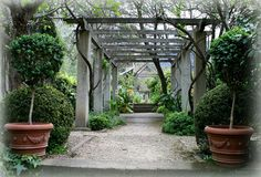 Potted and Pathed Pergola