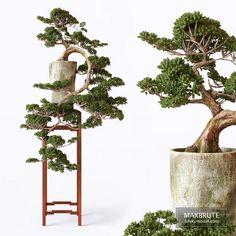 Bonsai Delonix Regia, Florence Art, Indoor Bonsai, Crystal Vase, 3d Models, Melaleuca, 3d Max, Ficus, Plant Care
