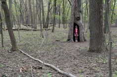 Girl in big tree