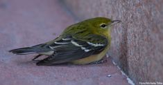 How to Care for an Injured Bird Until Help Arrives!