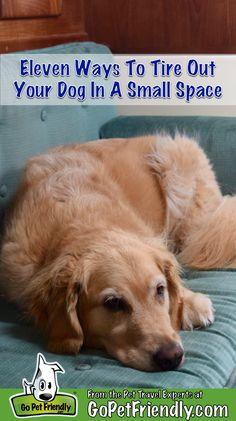 dog care,dog stuff,dog tips,dog training,dog hacks Training Your Puppy, Dog Training Tips, Potty Training, Training School, Dog Games, Brain Games For Dogs, Dog Activities, Dog Care Tips, Pet Care