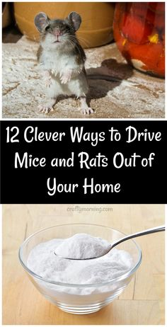 12 Clever Ways to Drive Mice and Rats Out of Your Home - Recipes and home remedies to get rid of mice! Mouse killers 12 Clever Ways to Drive Mice and Rats Out of Your Home - Recipes and home remedies to get rid of mice! Diy Mice Repellent, Natural Rat Repellent, Insect Repellent, Keep Mice Away, Getting Rid Of Rats, Home Health, Health Tips, Health Facts, Health Articles