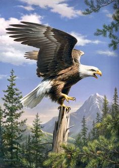 Types of Eagles - American Bald Eagle art portraits, photographs, information and just plain fun Beautiful Birds, Animals Beautiful, Photo Aigle, Animals And Pets, Cute Animals, Eagle Painting, Screaming Eagle, Eagle Pictures, Eagle Art