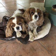 Roosa ja Hilda 6.6.2018 Dogs, Animals, Animales, Animaux, Animal Memes, Animal, Pet Dogs, Dog, Animais