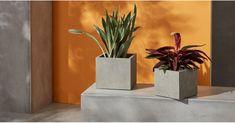 Heba Set Of Two Fibre Cement Square Planters, Grey Trough Planters, Planter Pots, Square Planters, Fibre, Concrete, Plants, Inspiration, Gray, Cement