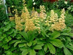 Shade Garden Plants, Outside Decorations, Garden Projects, Garden Inspiration, Eco Friendly, Flora, Green, Nature, Oaxaca