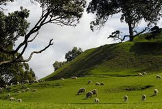 One Tree Hill, New Zealand. When we were visiting they had approximately 25 sheep for every person living on the island.