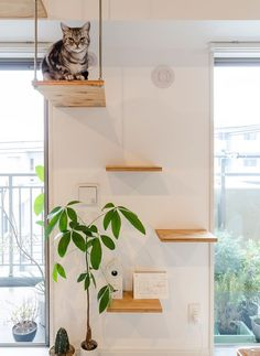 cat diy 30 Modern DIY Cat Playground Ideas In Your Interior