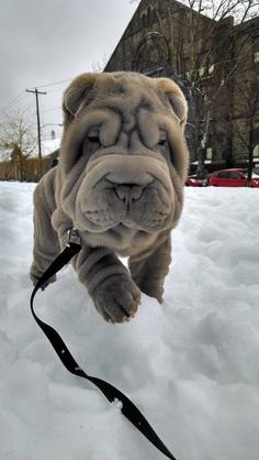 Oh the cute wrinkles!