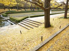 Road was covered with ginko leaves