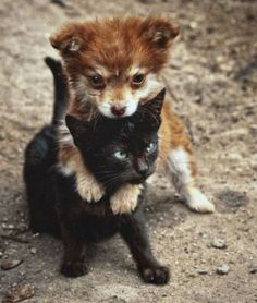 Funny Animals - 28 Pictures