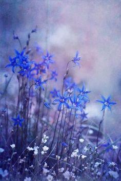f-iregirl:  Bluebell Heaven (photo by Priska Wettstein)